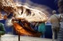 photo of dinosaur skeleton in museum