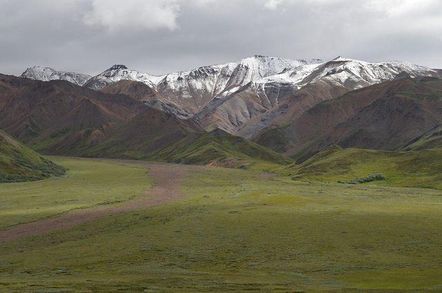 photo of denali national park