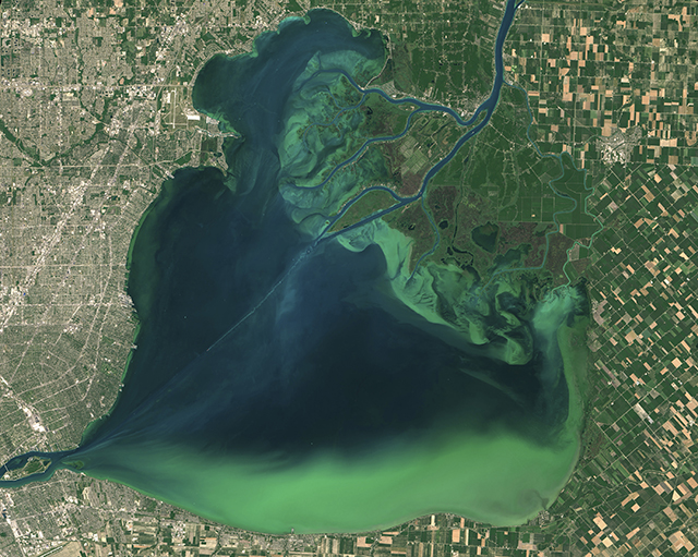 photo of algal bloom on lake st. clair