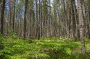 photo of northern forest