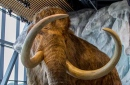 woolly mammoth diorama