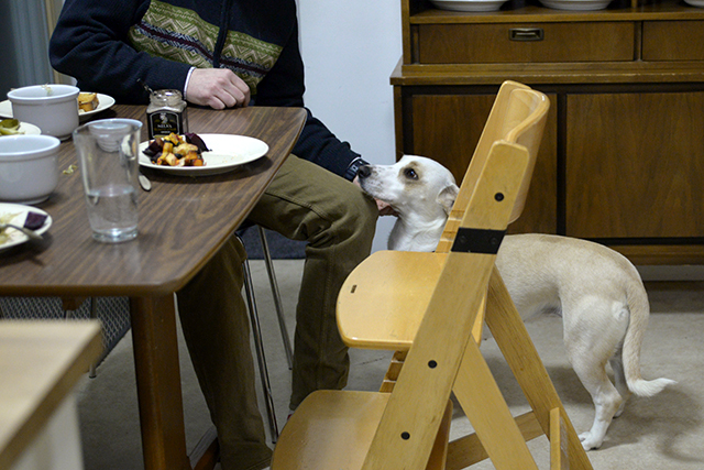 Colling shares his passion for food with his whole family, including Stella, the dog, who approaches everyone with an eye out for treats.