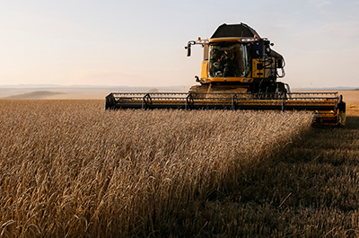 photo of a wheat field being harvested
