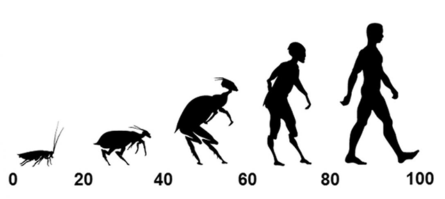 Cockroach to human scale developed for the study.