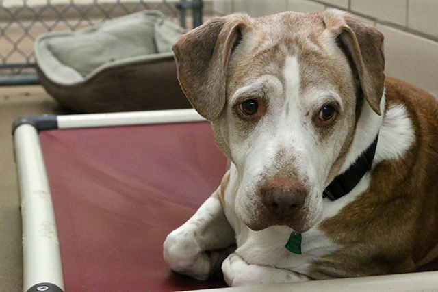Why Minnesota shelters have so many animals from the South | MinnPost
