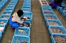 photo of worker sorting fish in japanse fish market