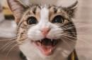 smiling kitteh