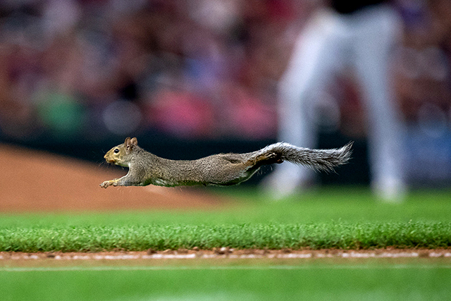 Astounding Why Twins Fans Are Nuts About The Target Field Squirrel Short Links Chair Design For Home Short Linksinfo