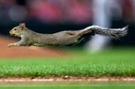 Target Field squirrel