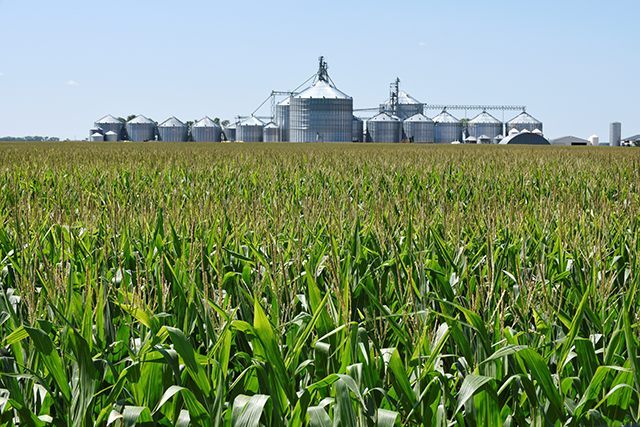 photo of corn field with silos in background