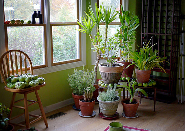Houseplants don't do much to improve indoor air, research ... on indoor spices, indoor trees, indoor organic gardening, indoor palms, indoor orchids, indoor plants, indoor ferns, indoor shrubs, indoor seedlings, indoor roses,