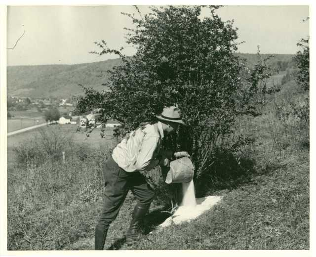 photo of worker pouring salt on bush roots