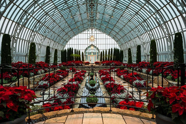 View the hundreds of poinsettias in the Marjorie McNeely Conservatory in Como Park through Jan. 12 from 10 a.m. to 4 p.m.