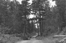 historic photo of dirt road through the woods