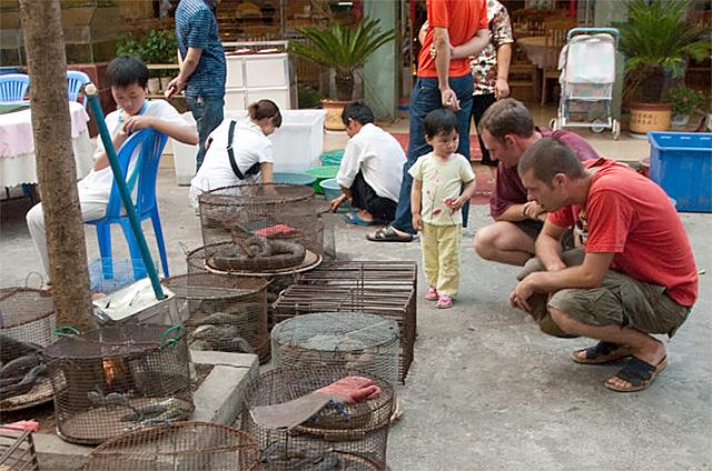 Illicit endangered wildlife trade in Möng La, Shan, Myanmar.
