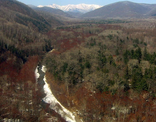 A valley near the town of Terney in Primorye Province is ideal fish owl habitat.