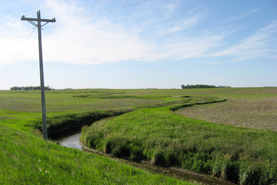 A stream buffer in the Lac qui Parle River Watershed.