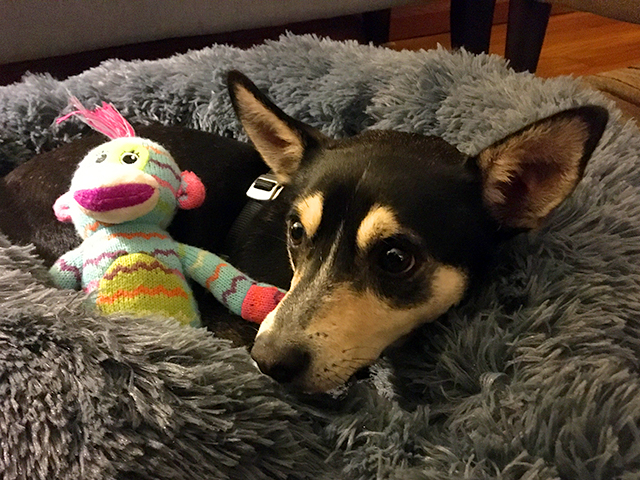 June was adopted from Secondhand Hounds, a Minnetonka-based animal rescue organization.