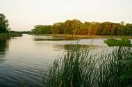 Wetlands in Robbins Island Regional Park near Willmar.