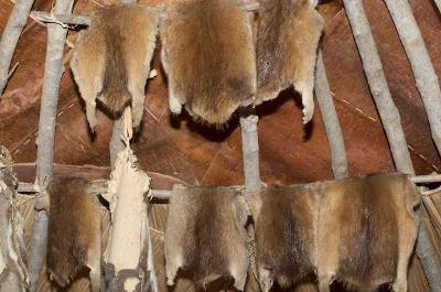 photo of muskrat pelts hanging