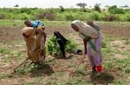 Somali women cultivate their farm