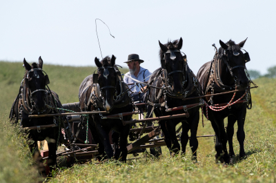 photo of amish farmer driving plow team
