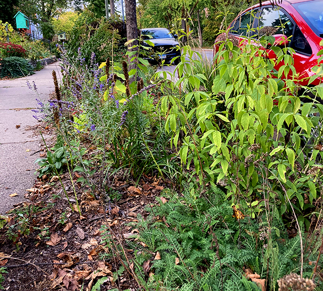 """Minnesota's Lawns to Legumes program is less about the money that's available and more about providing coaching as well as """"social acceptance"""" of doing something different with their lawns."""
