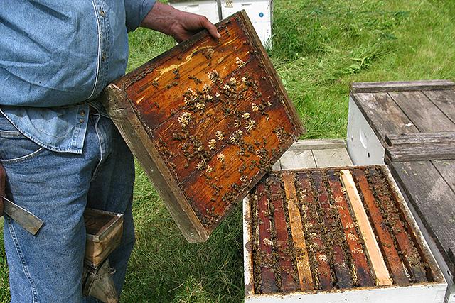 Manley Bigalk, 72, owns and operates Golden Ridge Honey Farm in Cresco