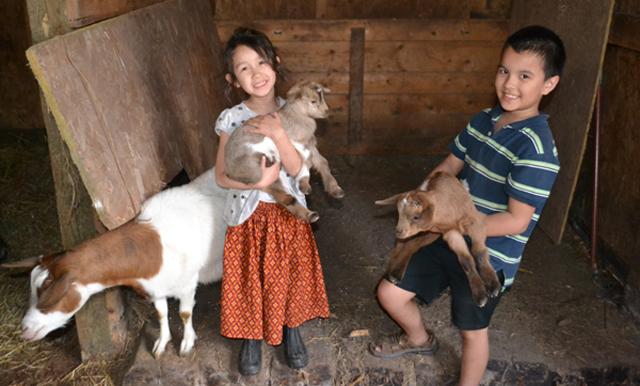Doeun family goats