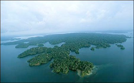 The Barro Colorado Island study site includes more than 400,000 individual trees and shrubs of over 300 species that have been marked, mapped and measured every five years for the last 30 years.