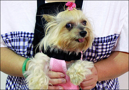 American pet owners spent about $48.5 billion on their pets in 2010.
