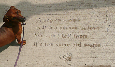 Jay Weiner's Waldo the Weiner is out for a walk near his favorite etched sidewalk poem in St. Paul.