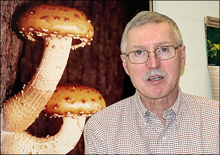Prof. David McLaughlin displays a famous mushroom photo in his office.