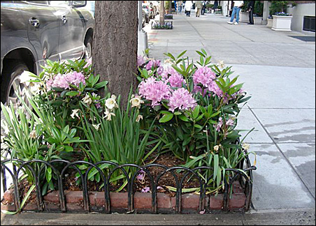 Landscaping and cleaner sidewalks have transformed New York.