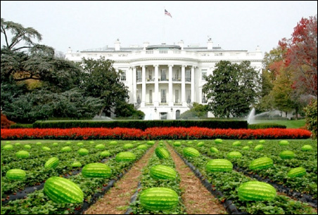 """Los Alamitos, Calif., Mayor Dean Grose resigned in March after being criticized for sharing an e-mail picture depicting the White House lawn planted with watermelons under the title """"No Easter egg hunt this year."""""""