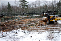 The brothers jumped at the opportunity to buy a logging company.