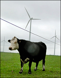 Wind turbines in rural Dodge Center