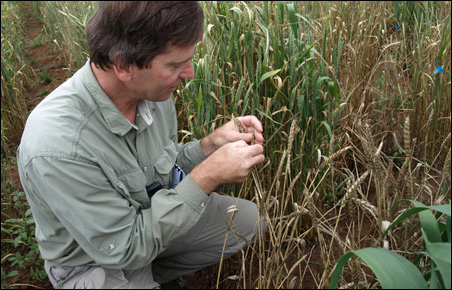Brian Steffenson, a U of M plant pathologist, tested barley in Kenya.