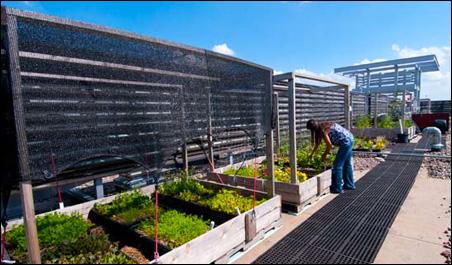 Ecological Gardens' Paula Westmoreland at work high above Richfield.