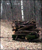 Stacked logs, ready for the fire.