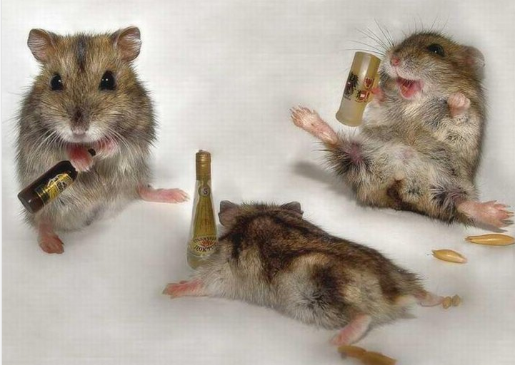 On their Facebook page, the Star Tribune's mice celebrate their dining.