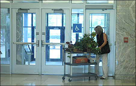 MnDOT employee Roxanne Wilder of Eagan wheels her plants out of the Department of Transportation building.