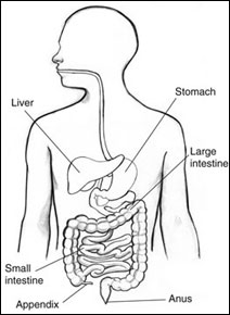 The appendix: useless organ or your body's nature reserve?