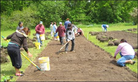 Residents work in a community garden near Faribault.