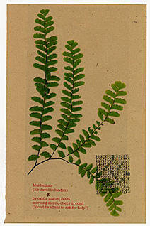 """Maidenhair"" from Eden"