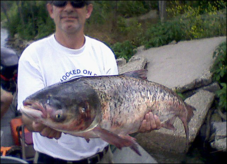 A fisheries biologist with the Illinois DNR holds a bighead Asian carp caught in Lake Calumet.
