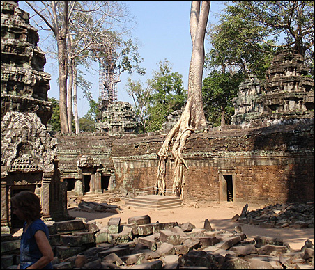 Nature is winning its battle with Cambodia's Ta Prohm temple.