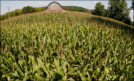 "The Legislature's ""Green Acres"" debate may come down to how to define farmland."