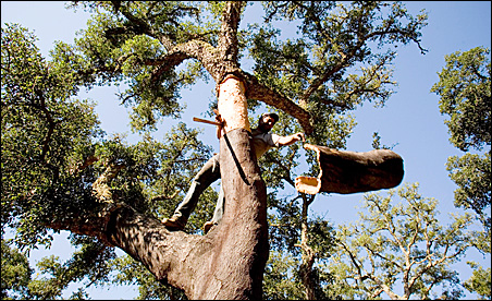 Ze Santos strips bark from a cork tree on a farm in Odemira.