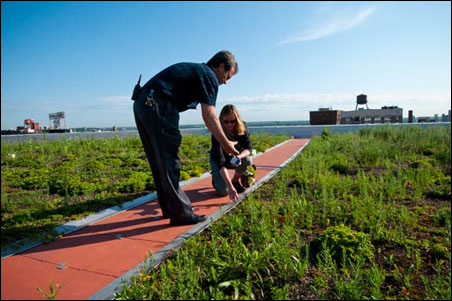 Installed in September of 2009, the green roof is nearing the end of its second full summer.